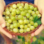 Health-Benefits-of-Gooseberries